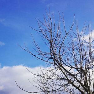 329. Und da war er, der wunderbare blaue Himmel. Ich liebe es einfach so, nach Tagen die Sonne wiederzusehen.😍