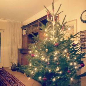 330. Als typisches Ritual mit meiner Mama einen Tag vor Weihnachten den Weihnachtsbaum schmücken. Abgesehen von einem Lichterketten-Tobsuchtsanfall war es einfach nur schön. 😀😍